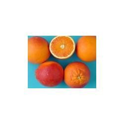 Oranges Tarocco de Sicile -...