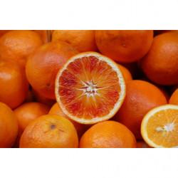 Oranges Sanguines...