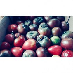 Tomates bio 1 kg -...