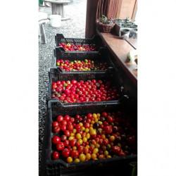 Tomates cerise bio 500gr -...