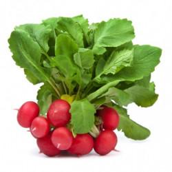 Botte de radis rouges - Les...