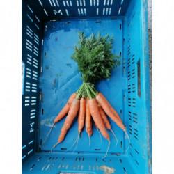 Botte carottes - Les Pieds...